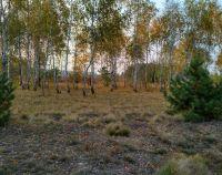 №12675793, продается земельный участок, участок 50 сот, феневичи, с.Феневичи, Киевская область, Украина