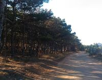 №13168758, продается земельный участок, участок 0.05 га, СТ Вулкан, г.Севастополь, Крым, Украина
