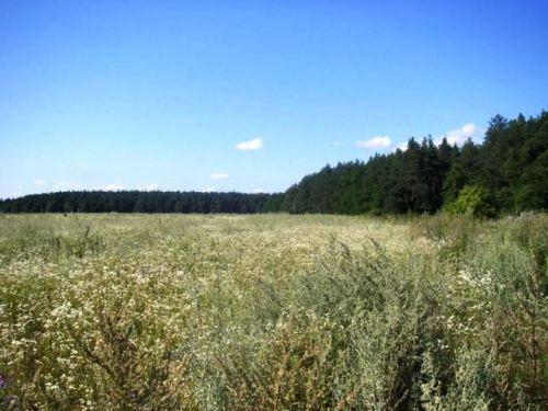 киевская область макаровский район с.березовка, 19 км от кп по житомирской трассе, ...