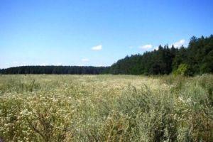 №9393453, продается земельный участок, участок 200 сот, Киевская, с.Березовка, Киевская область, Украина